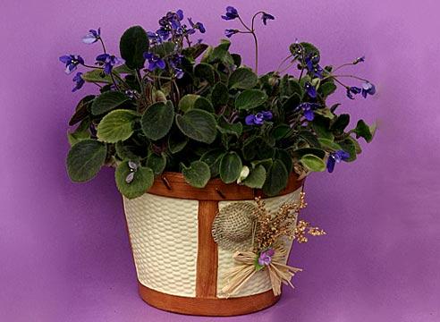 Полив комнатных цветов. Как часто поливать растения 42