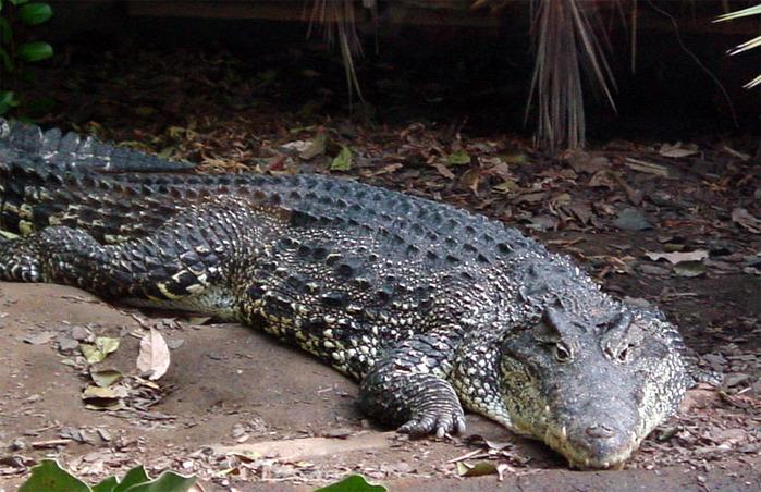 Permanent Link to Теорема о крокодиле. Прокомментировать запись Как