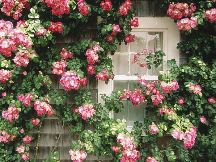 понравилась мне больше, хотя сюжет его проще: барышня, сидящая у окна, в ожидании любимого, проводит время за таким...