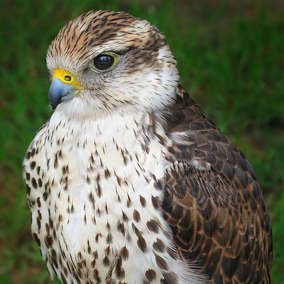 Когда нападают птицы (47 фото).  Фотожаба.  Птицы как люди (46 Фото).