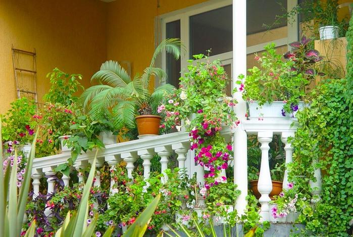 Фото цветы для балкона летом
