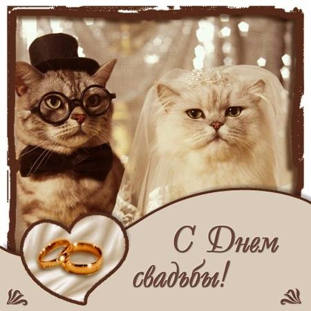 Смешные картинки с 7 летием бракосочетания
