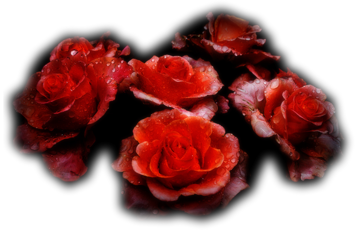 http://img1.liveinternet.ru/images/attach/c/1/60/908/60908567_1277744862_Narah_0579_Flowers_June2010.png