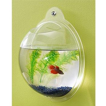 комфортно в аквариумах золотые рыбки чувствуют себя, когда на одну.