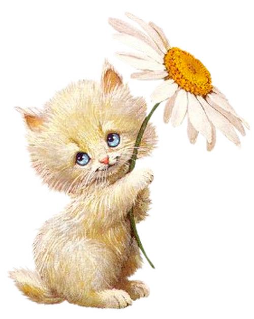 ...он не про котёнка а про хомячка.  Успехов вам!  Анабель.