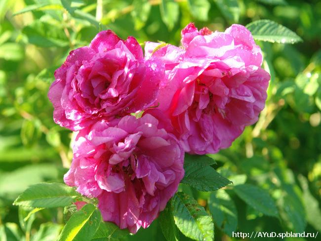 Просто видишь.  Роза красива, но часто не пахнет (или очень слабо).  А цветок без запаха - как человек без души.