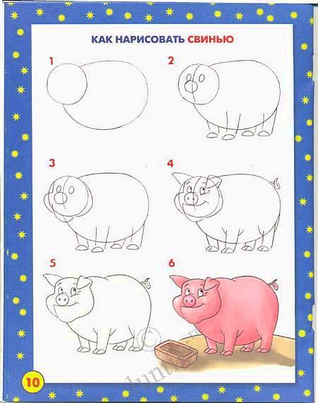 Уроки поэтапного рисования - Свинка.