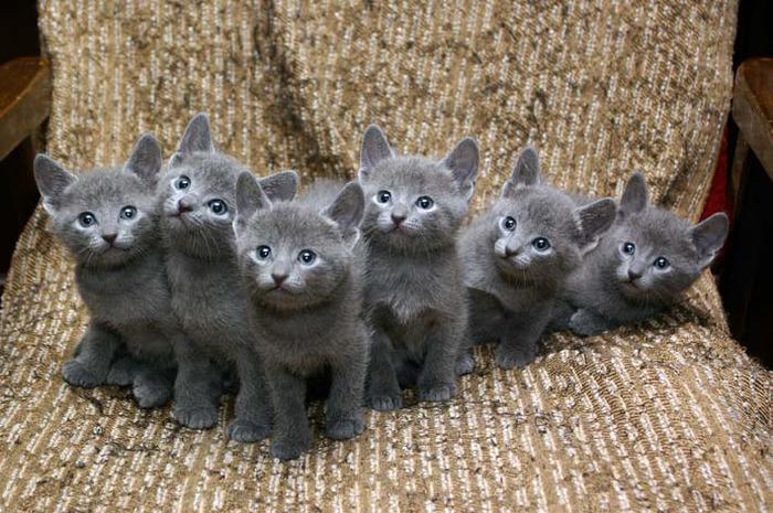 09 сентября 2011, 23:56. фотографии кошек из сети. кошки фото.