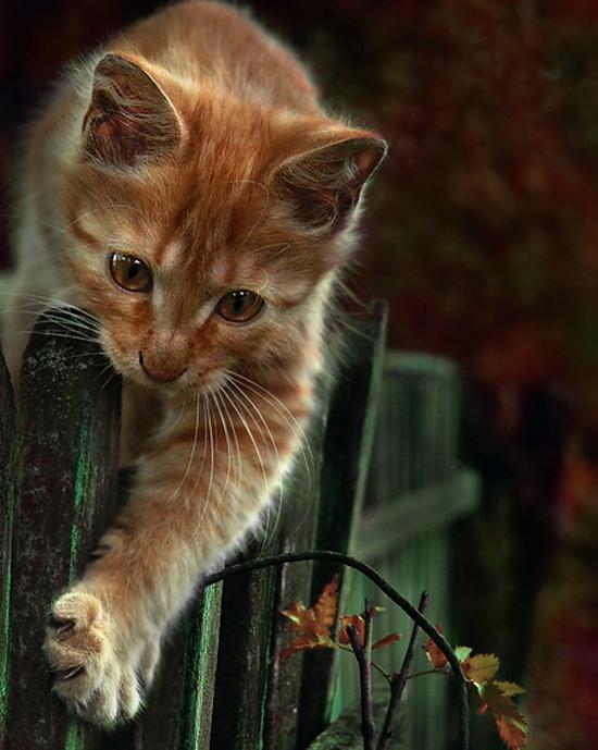 Настоящий Кот всегда лезет между Вами и вашей газетой Настоящий Кот не хуже Гудини умеет избавиться от ошейника и...