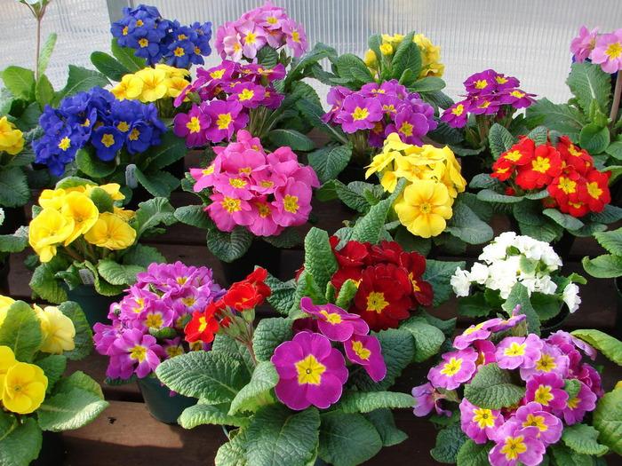 (1024х768, 325 Kb) Цветы на посадку - красивые обои и фото установить на рабочий стол, тема - цветы.