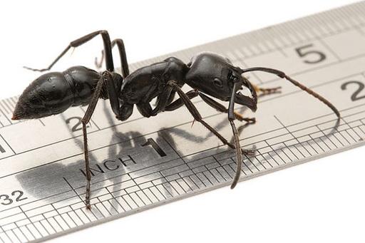 ...микро-мире муравьиных цивилизаций, которые Вы можете наблюдать на...