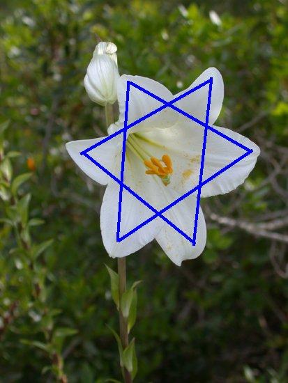 """...Лилии долин """" исходят из центра образуя геометрическую фигуру звезда, а вовсе не являются пентаграммой."""