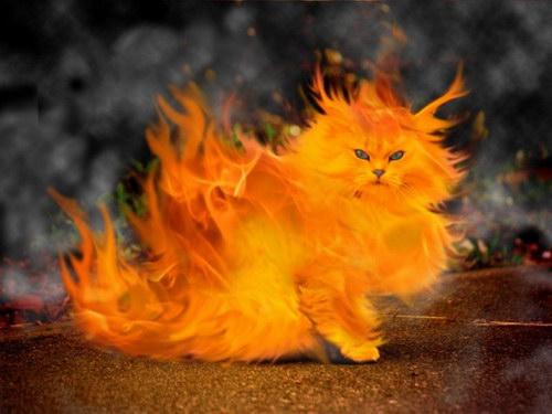 http://img1.liveinternet.ru/images/attach/c/1/62/998/62998698_fire_cat.jpg