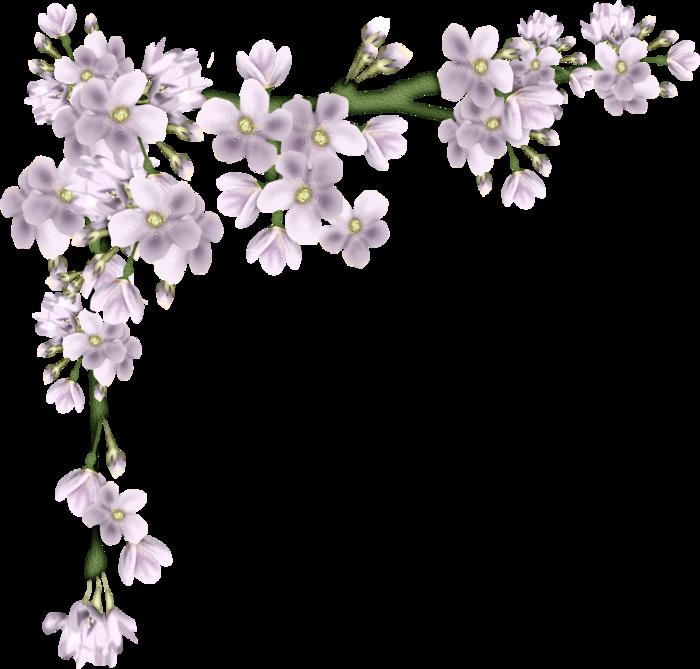 Картинки цветов осенних для презентации