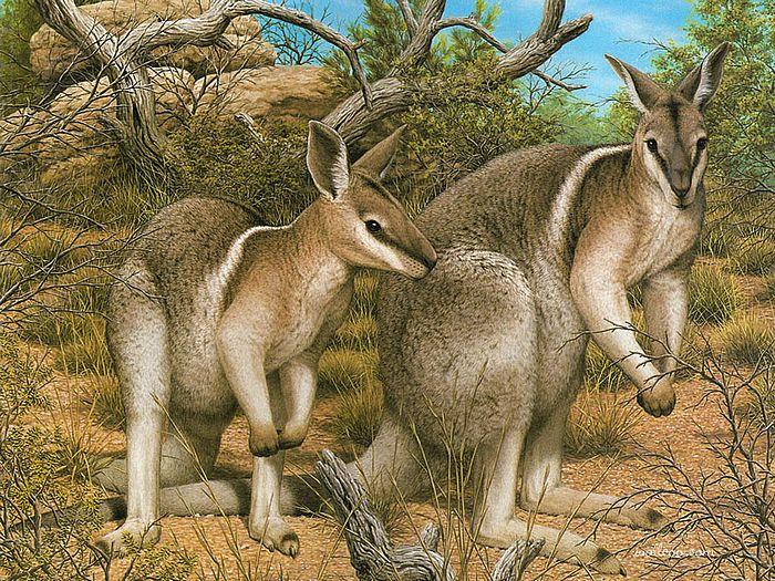 Эти шикарные иллюстрации из Австралийского географического журнала, который уделяет большое внимание редким...