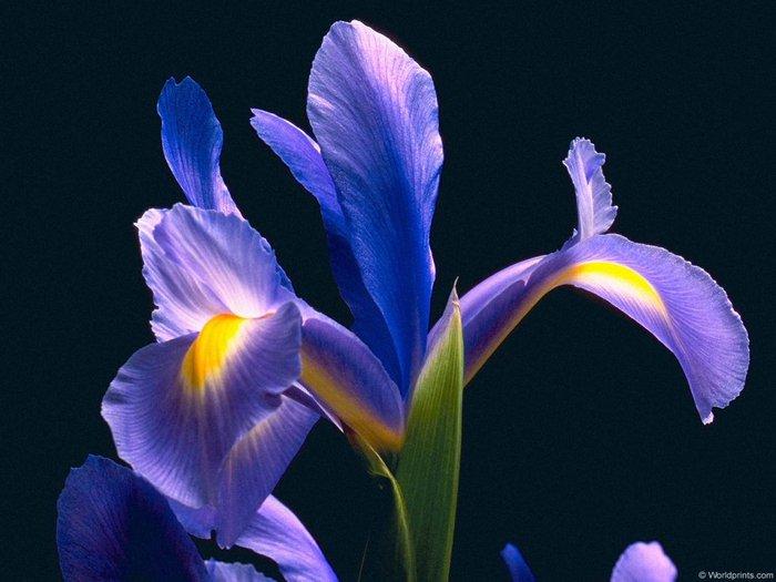 Biagio antonacci - iris.  14 просмотров.