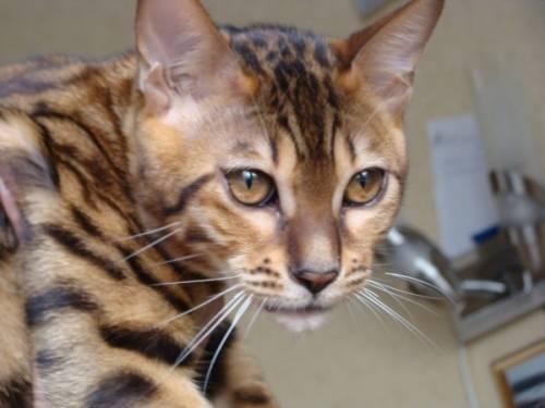 Породы кошек подборка фотографий