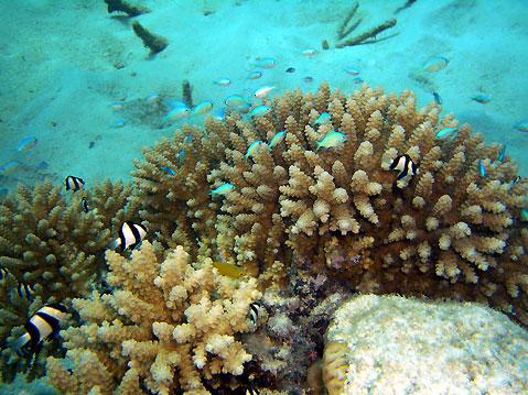 Australia-Underwater-life-3435 (479x359, 81Kb)