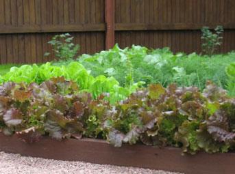 вариант декоративного огорода от идеи да воплощения мастер класс,