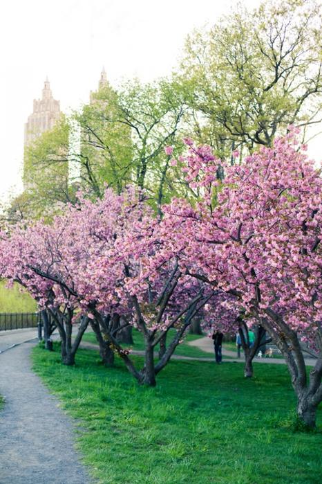 Цветущие парки - Central Park/2822077_Central_Park (466x700, 325Kb)