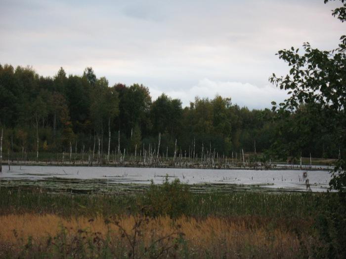 берендеево болото (700x525, 95Kb)