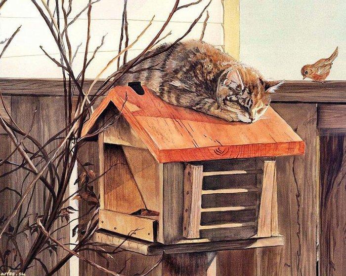 кошачьи фото 1280x1024 с домашняя кошка persis clayton weirs один лежит усики коричневая шерсть коричневый нос...