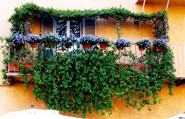 Многие хозяйки, которые страстно любят ухаживать за цветами и принимают активное участие в озеленении квартиры или...