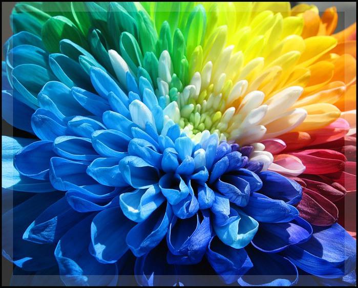 http://img1.liveinternet.ru/images/attach/c/1/74/803/74803517_large_0_443d2_eb6b3950_XL.jpg