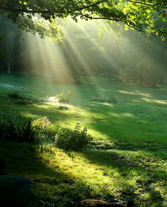 fotolia_1917615nature-soleil-vert (563x700, 203Kb)