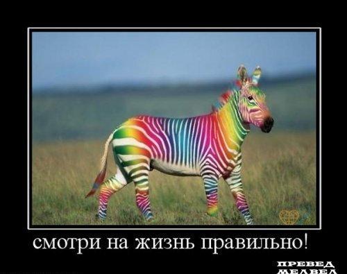 зебра -радуга (500x395, 31Kb)