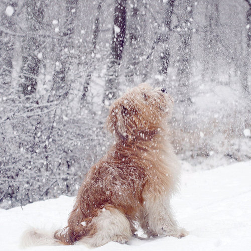 1354980185_youloveit_ru_winter_puppy05 (500x500, 77Kb)