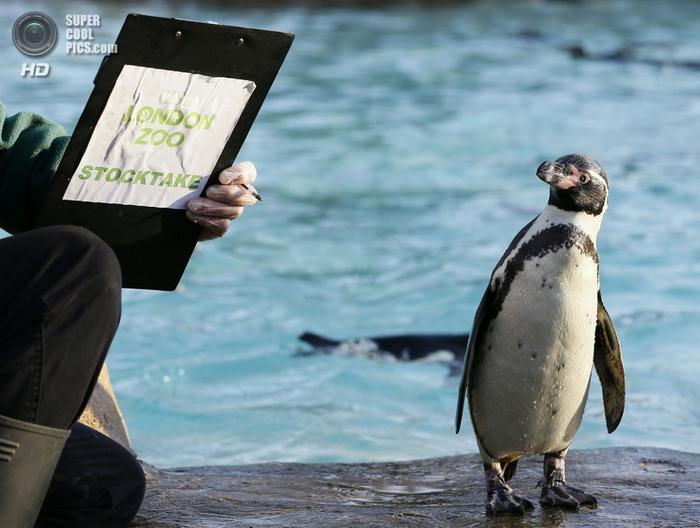 лондонский зоопарк фото (700x528, 240Kb)