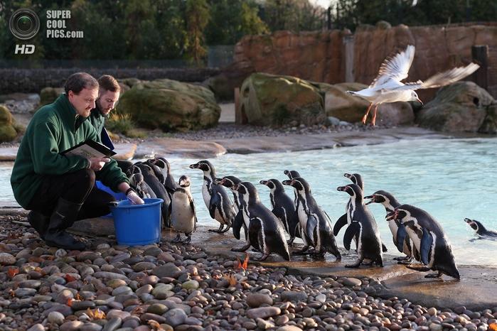лондонский зоопарк фото 3 (700x466, 292Kb)