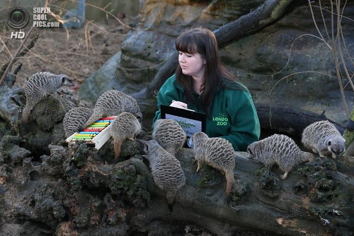 лондонский зоопарк фото 7 (700x466, 293Kb)