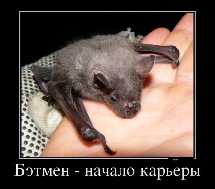 5395830_demotivators_animal_smeh_002 (700x615, 69Kb)