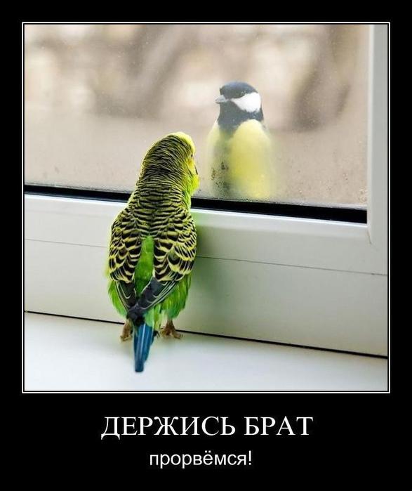 5395830_demotivators_animal_smeh_005 (587x700, 124Kb)