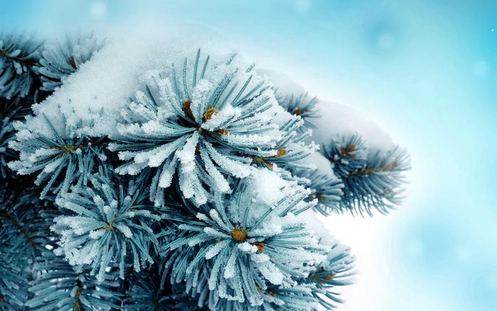 зимняя картина 10 (700x437, 420Kb)