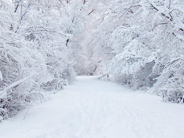 зимняя картина 13 (600x450, 283Kb)