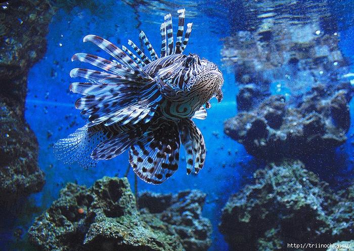 Живой подводный мир!