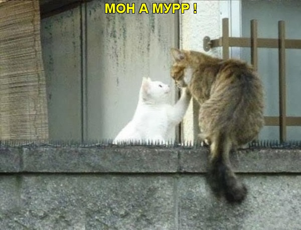 К чему встретить кошку на пути