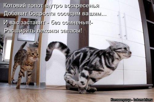 1388865300_kotomatricy-novye-13 (500x332, 99Kb)