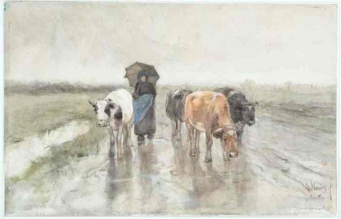 11 Koeien en een herderin op een landweg in de regen (700x451, 17Kb)