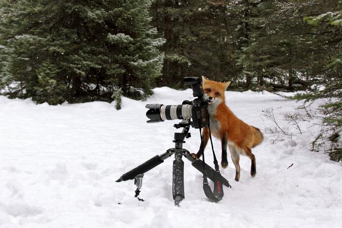 fotokameru-ukrast-popytalas-kartinki-koshki-sobaki-smeshnye-zhivotnye-kote_5284635935 (700x466, 329Kb)