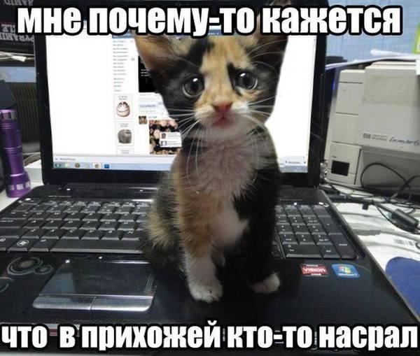 6347069428403_1355125996_05 (600x509, 49Kb)