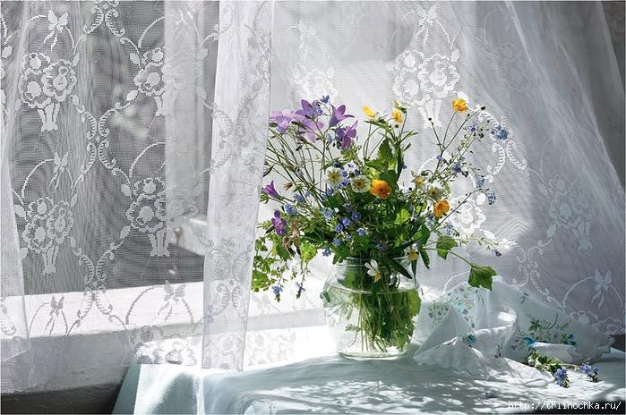 wind and window flower