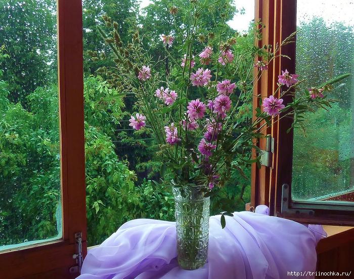 Счастье в открытое окно! Натюрморты