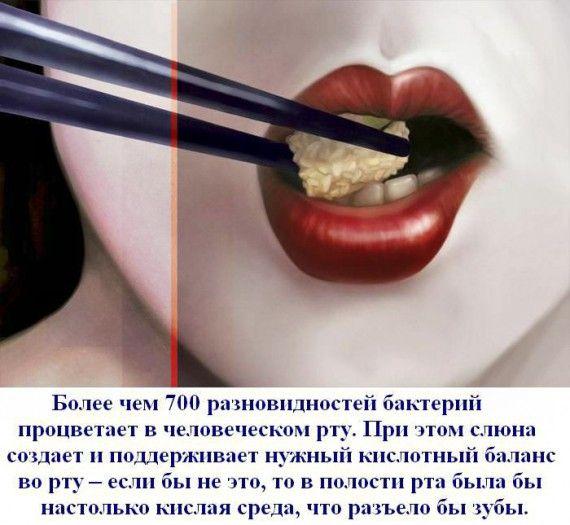 1330496134_fakt_015 (570x525, 55Kb)