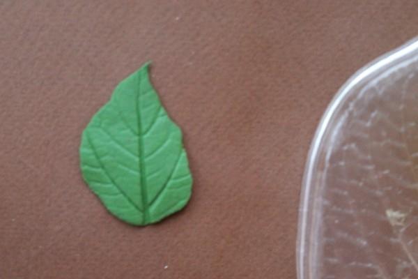 Розы из полимерной глины. СЕРДЦЕ ИЗ РОЗ (27) (600x400, 93Kb)