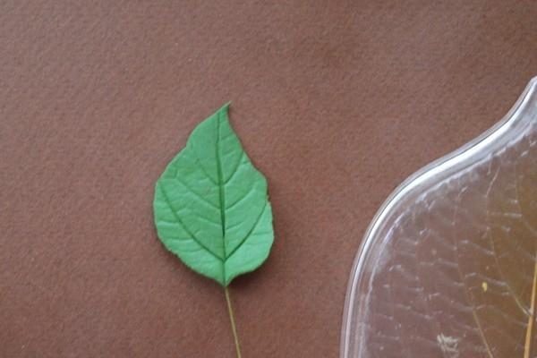Розы из полимерной глины. СЕРДЦЕ ИЗ РОЗ (28) (600x400, 111Kb)