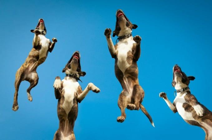 прикольные фото собак 4 (680x451, 107Kb)